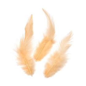 6621201 Rooster Feathers Apricot