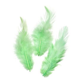 6621430 Rooster Feathers May Green